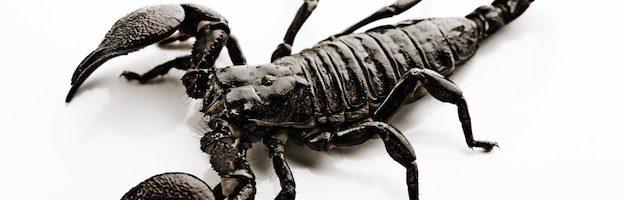 Datos sobre Escorpiones
