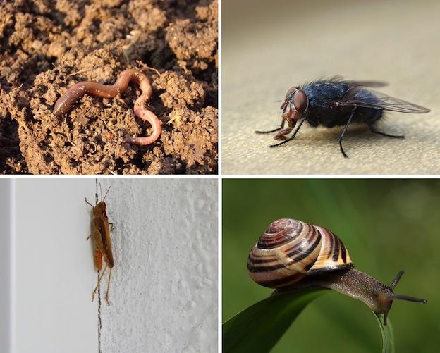 Dieta de los escorpiones.