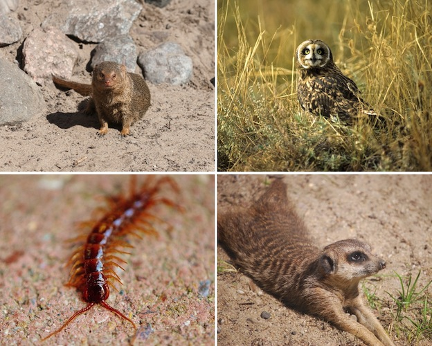 depredadores_escorpiones