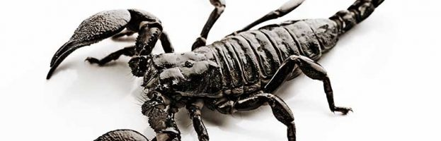 Scorpion Facts