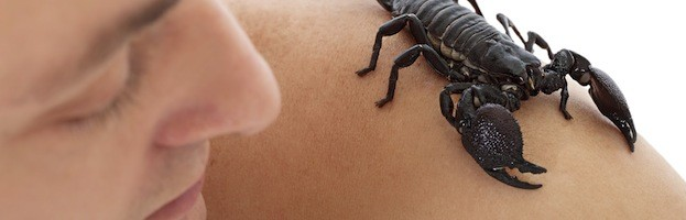 Scorpions and Human Beings