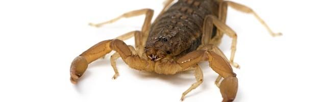 Scorpion Videos