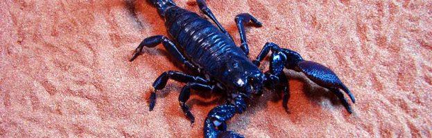Types of Scorpions