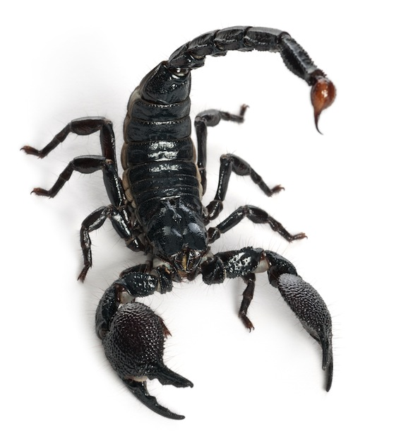 Scorpion Venom Research Facts